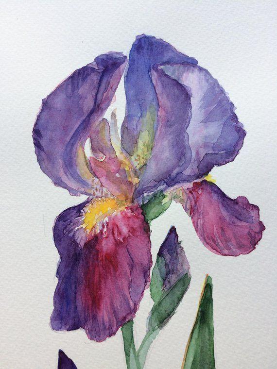 Iris Watercolor Painting Iris Flower Painting Floral Etsy Iris