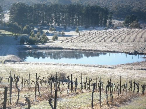 Bywong Vineyard with Cellar Door - note vines aren't blooming in October
