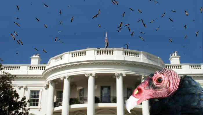 Looking Skywards, Buzzards Closing in on the White House, Obama, Hillary Clinton, Valarie Jarrett