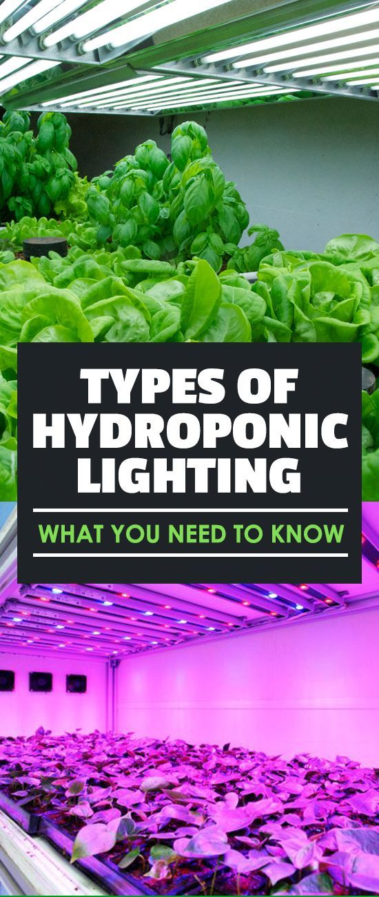 When growing indoors, you have to supplement with artificial light..but which should you use. The different types of hydroponic lighting have different benefits.