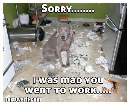 """Sorry... I was mad you went to work."" ~ Dog Shaming shame - Weimaraner"