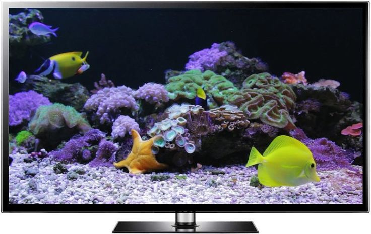 Coral Reef Tank, an aquarium screensaver and video recorded spring 2014 in northern Thailand. Featuring a star fish, living corals and colorful fish such as Yellow Tang. Shot in full HD for TV screens and computer screens.