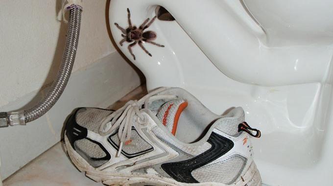 Les araignées, dans la maison, ce n'est pas très agréable. Les toiles, c'est moche et, souvent, les petites bêtes qui vont avec, ça fait peur ! Les tuer ? Tout de même pas. Nous ne som