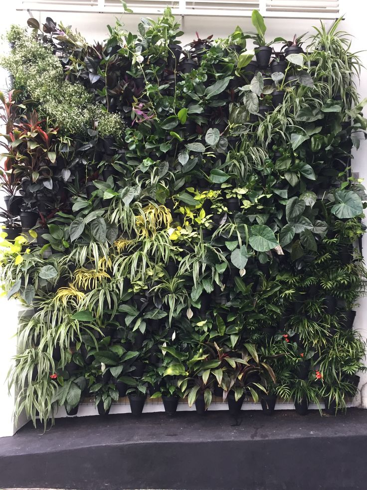 Atmosphy Green Wall