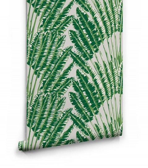 Feather Palm