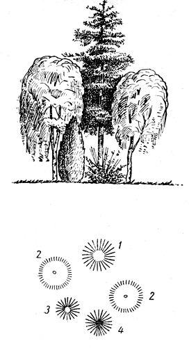 Рис. 17. Контрастная ландшафтная группа: 1 — сосна крымская; 2 — береза бородавчатая; 3 — биота восточная; 4 — тамарикс одесский
