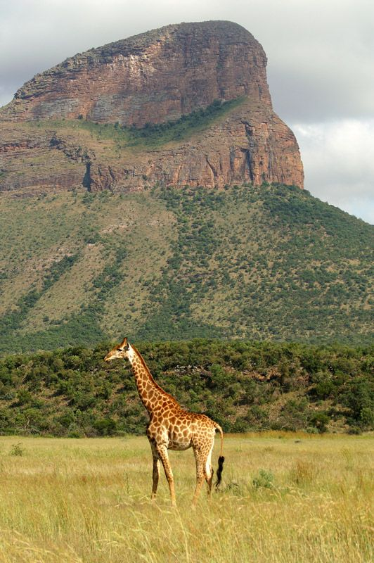 Volunteer with Via Volunteers and experience South Africa first hand. Entabeni Reserve, Limpopo