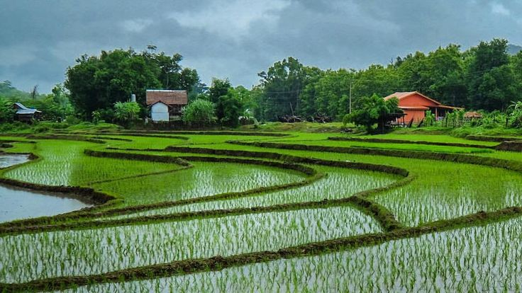 """@live_life_love_travel on Instagram: """"Rice paddies in the hills outside of Luang Prabang"""""""