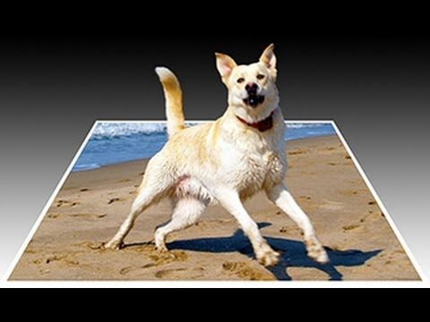 Photoshop tutorial showing how to make a 3D, pop-out photo effect by making an object, animal or person look as if it's popping out from a photo.    Tutorial: Quick selection & refine edge tools: http://www.youtube.com/watch?v=jI-9Mr7cLBY    Dog photo:  http://db.tt/fXs6tIDR