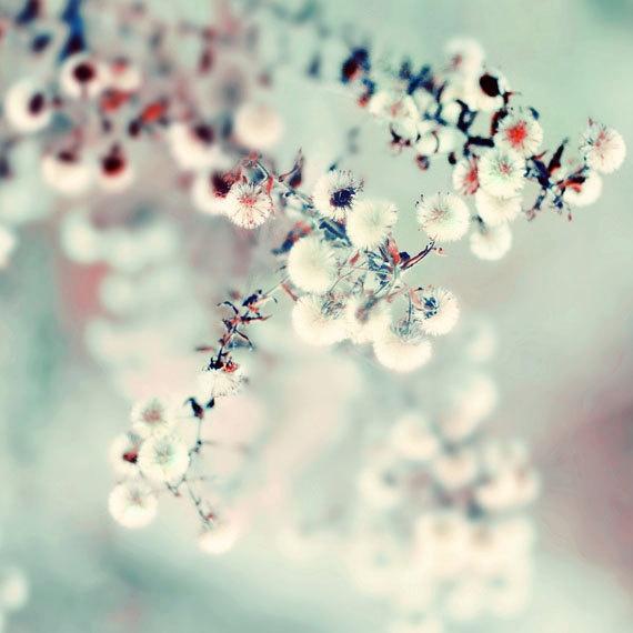 Nature Photography 8x8 Print  Midwinter Daydream  by ellemoss