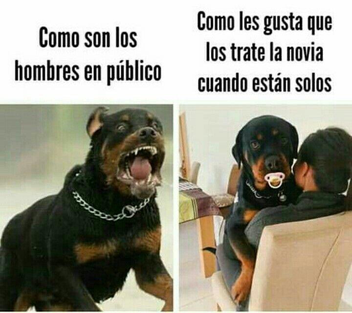 Pin By Ivonne Leon On Frases De Amor Pinterest Memes New Memes Animal Memes