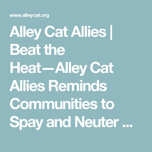 Alley Cat Allies   Beat the Heat—Alley Cat Allies Reminds Communities to Spay and Neuter Cats Before Kitten Season to Prevent Litters