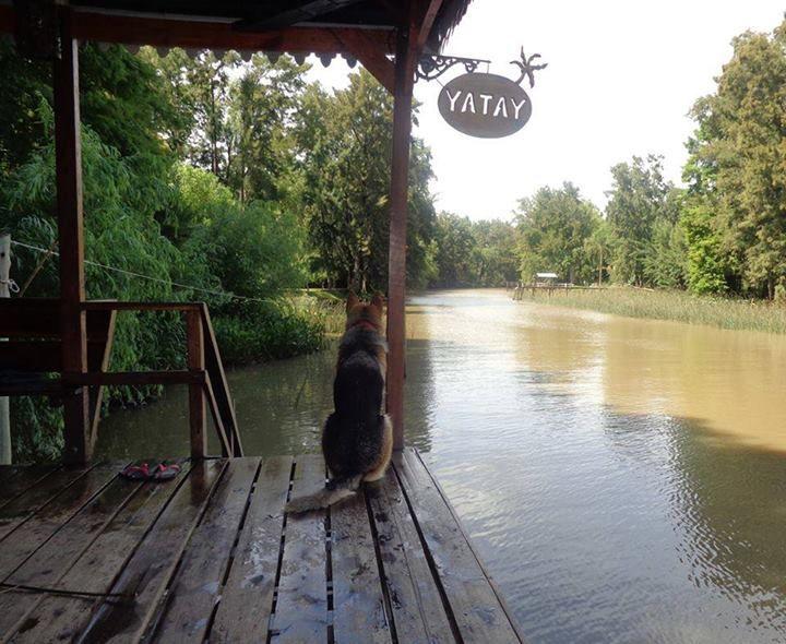Yatay Tigre