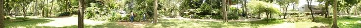 NOMBRE DE LA FOTO: Madre monte.2  PIE DE FOTO: Alrededores llenos de arboles, magia y solo color.