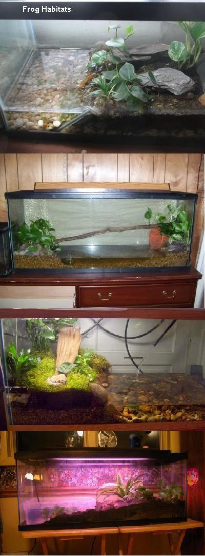 frog habitat in aquarium...terrarium?