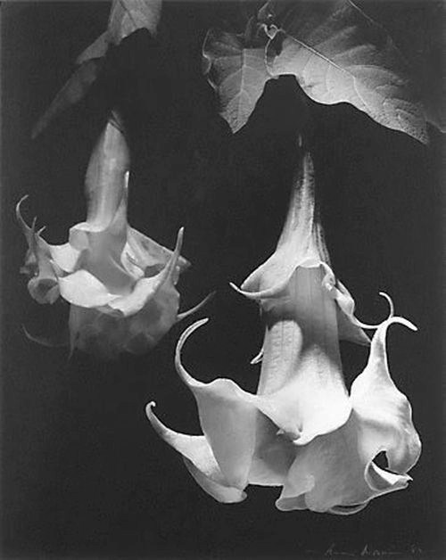 31 best max dupain images on pinterest australian art black white photography and au