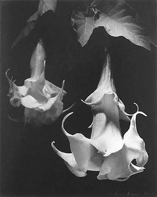 Max Dupain - Salvadorium Dalii, 1982