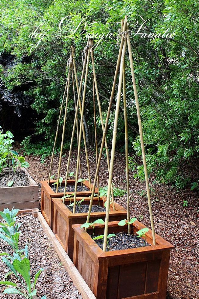 Best 25 bean trellis ideas on pinterest cucumber for Vegetable garden planter box designs