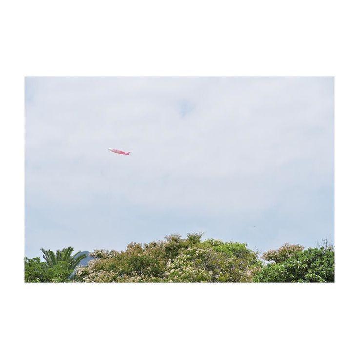 お空に鯉のぼり  #木村まや  #ハタ上げ  #凧揚げ