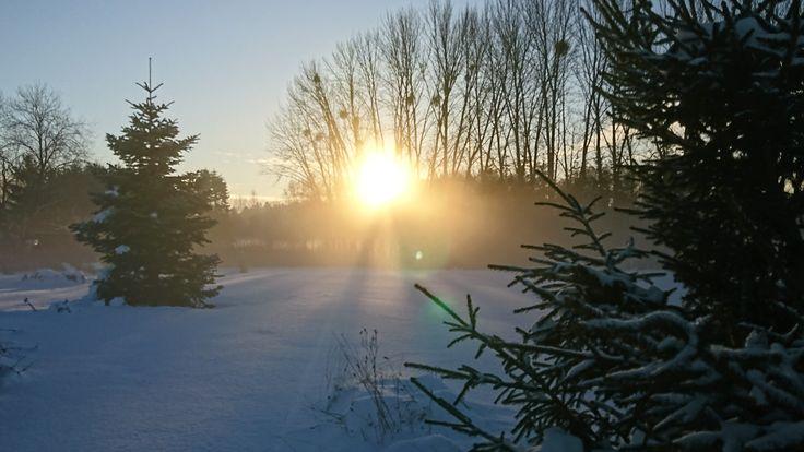 Beautiful day. ##lovemygarden #torshälla