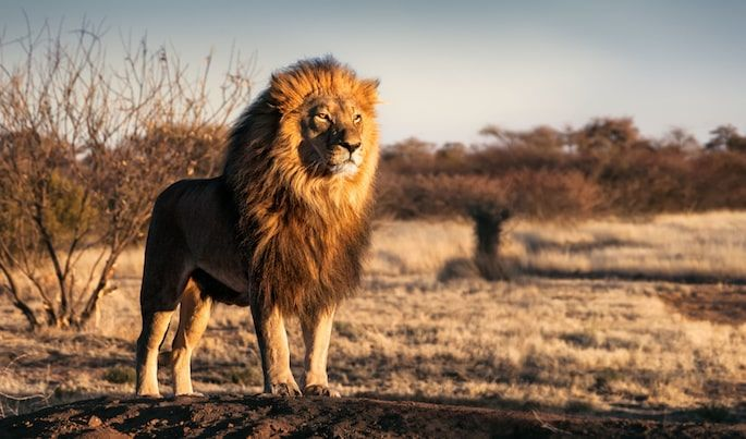 12 Jewish Given Names From the Animal Kingdom - Lifecycle