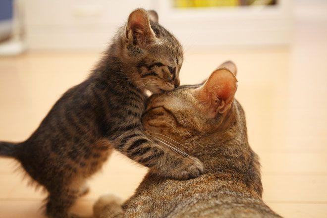 I'll kiss it better, momma.