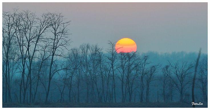 Tramonto tra i rami. Pic: Leonetto Strambi. #Lomellina #natura #ambiente #tramonti