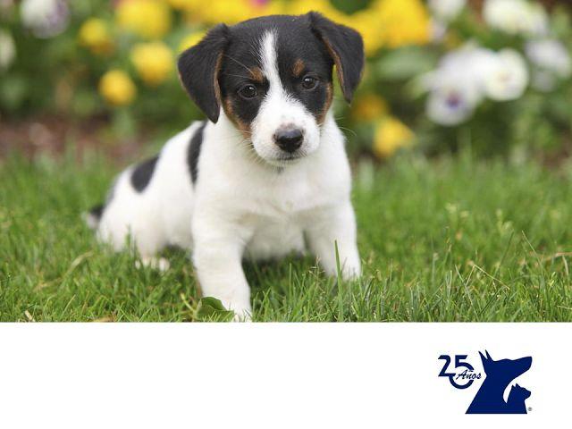 Lipomas en perros. LA MEJOR CLÍNICA VETERINARIA. A algunos perros les suelen salir bolas o bultos en su cuerpo, sobre todo en la parte del pecho y abdomen. Estas bolitas pueden ser de grasa y se llaman lipomas. Pocos son los que se consideran malignos y, en general, requieren de una supervisión frecuente.  Sin embargo, puede ser un tumor maligno, por ello realizamos algunas pruebas diferenciales. En Clínica Veterinaria del Bosque te asesoramos acerca de los lipomas…