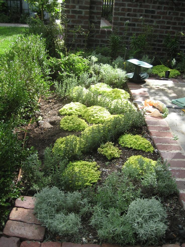 Boxwood hedge frames knot garden lavender santolina for Knot garden design ideas