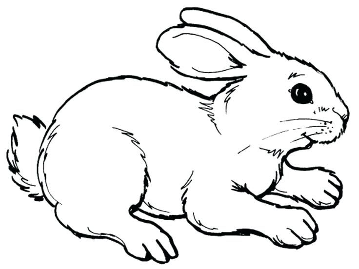Hare Coloring Pages Realistic Rabbit Printable And Bunny Tortoise