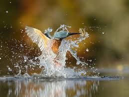 Image result for wild photography birds