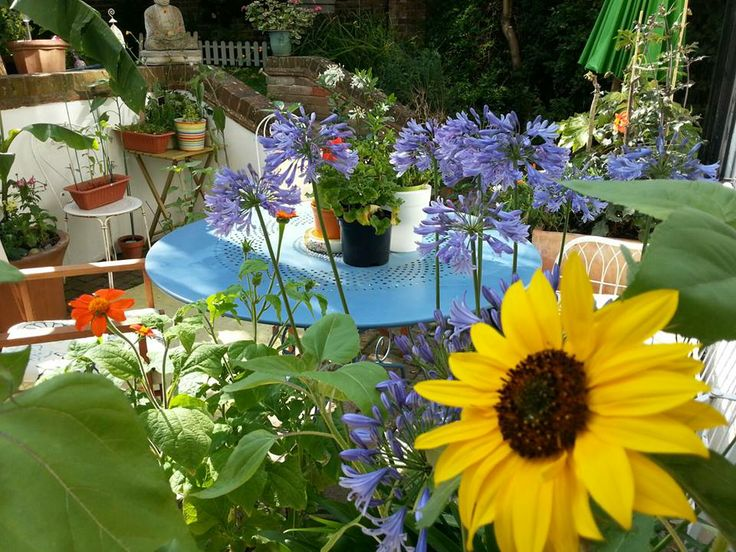 UK Summer gardening in a changing climate - what will our gardens have to deal with in the future?http://www.myclimatechangegarden.com/blog/climate-change-gardening-2013-and-beyond