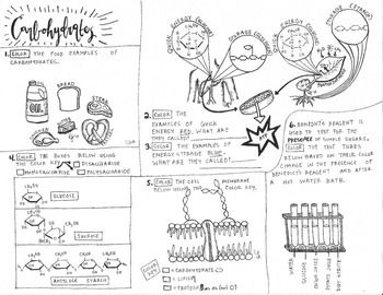 20 best biology coloring sheets for my special ed kids