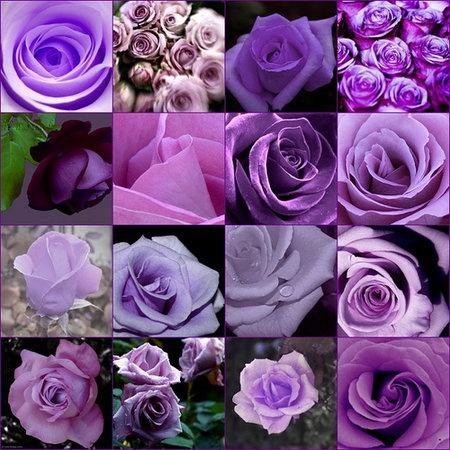 Wedding, Flowers, Purple, Roses - purple roses - Project Wedding