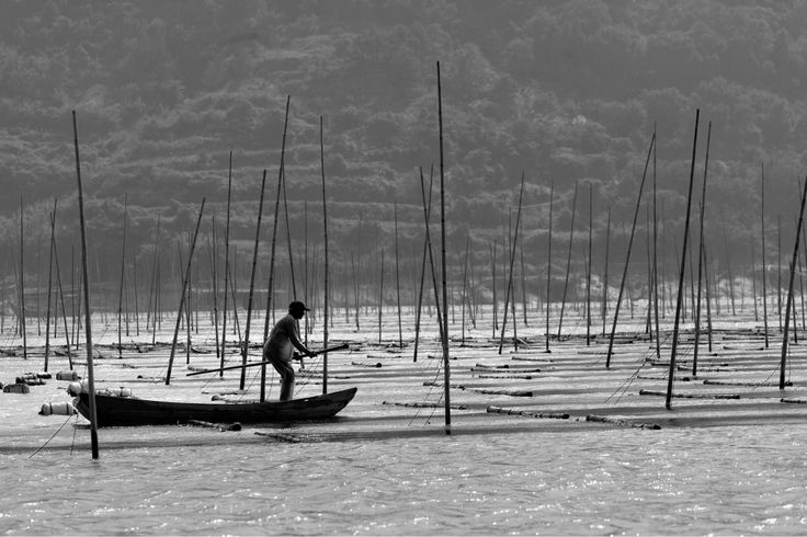 Boat - Book: Distant Song, China #aquaculture #fisherman #xiapu --- Barco - Livro: Distant Song, China