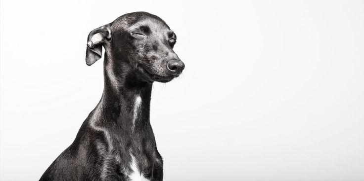 Fotografía de perros | Fotógrafo de mascotas :: Santos Román Retratista Animal