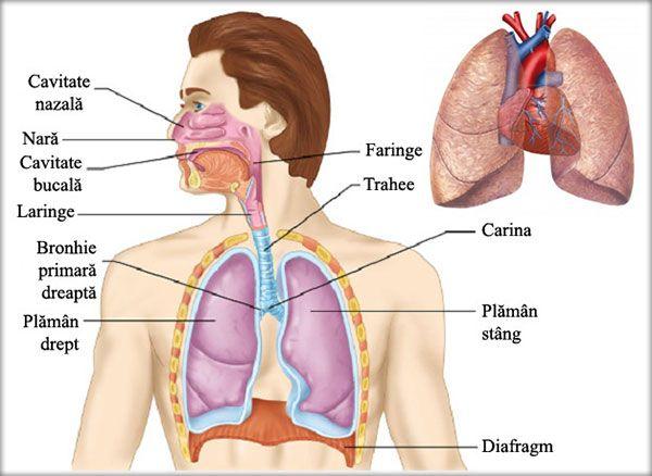 Coronavirus. Ce se întâmplă cu plămânii celor care fac pneumonie şi mor din cauza COVID