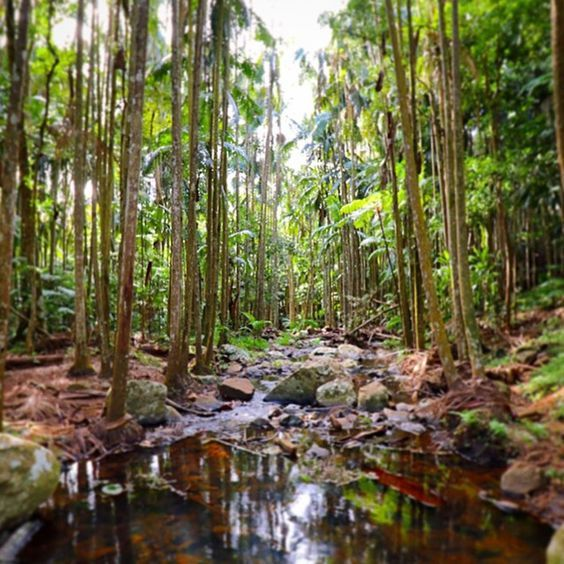 Re-acquaint yourself with nature at Curtis Falls in Tamborine Mountain National Park. | 17 Amazing Places To Go On The Gold Coast That Aren't The Beach