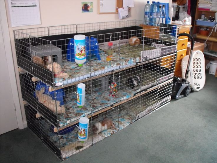274 best images about guinea pig cage ideas on pinterest for Diy playpen for guinea pigs
