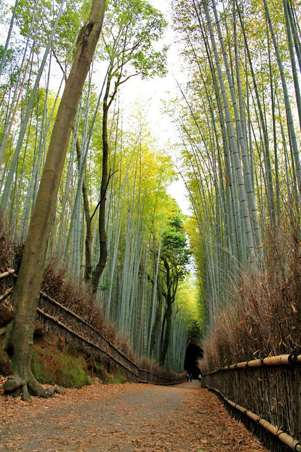 8 Places to Visit in Kyoto, Japan