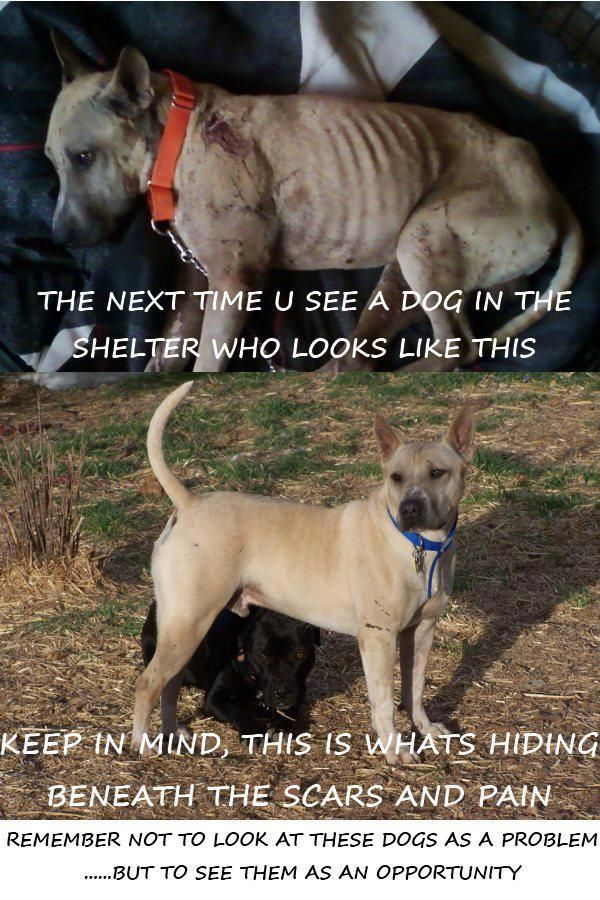 dog rescue Basics of how to start an animal rescue, including considerations like providing   if they are interested in becoming members, outline the different levels of.