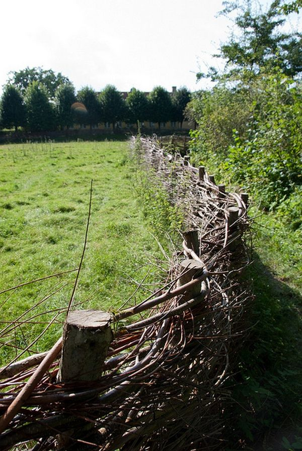 30 best Natural fence ideas images on Pinterest Gardening
