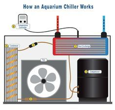 Keeping your aquarium water temperature stable and within ideal ranges for sea life is essential. While heaters are nearly ubiquitous in our hobby, chillers are another useful piece of equipment that helps aquarium owners regulate the temperature inside their tanks. But how do aquarium chillers actually cool down water? Check out our aquarium chiller diagram to find! We've included some best practices and a how-to video so you can learn even more.