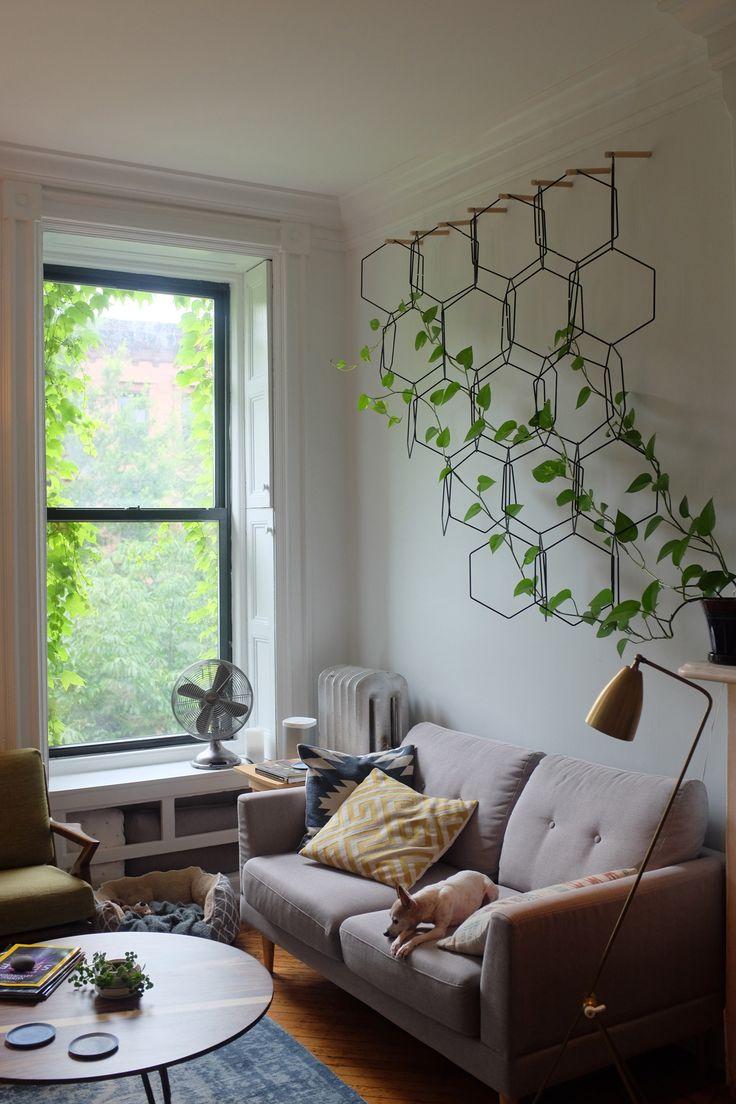 Anno ny2 sxk pinterest plantas enredaderas y plantas interior - Enredaderas de interior ...