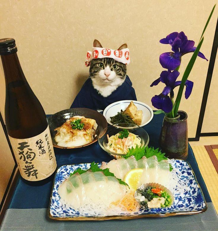 Thank you for 100,000 followers ❤️ 10万フォローありがとうございます‼️ たくさんの方に、いつも見て頂いて感謝しています。これからも、よろしくお願いいたします♀️コメントのお返事出来なくてスミマセン全て拝見しています❣️ #cats#cat#catstagram#catsofinstagram #instacat_meows#instacat_models#food #foodstagram#chef#chefstagram#picneko  #japanesefood#sashimi#sake#にゃんこ#猫 #ねこ#みんねこ#ふわもこ部#ペコねこ部 #ヒラメの刺身#わらびと厚揚げの煮物 #豆腐と山いもの鉄板焼#春雨サラダ#日本酒 #天狗舞#mannishboys#斉藤和義#zip写真部