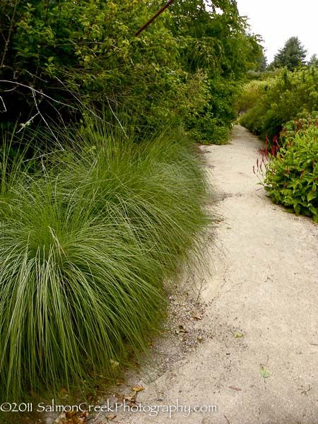 104 best images about fl ornamental grass on pinterest for Decorative grasses full sun