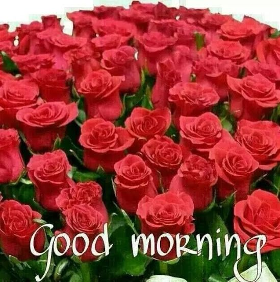 Good Morning Images With Rose Bouquet Images About Good Morning On