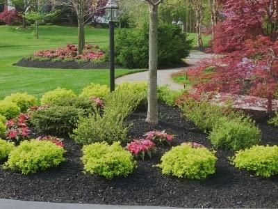 Side Yard Landscaping Full Sun House