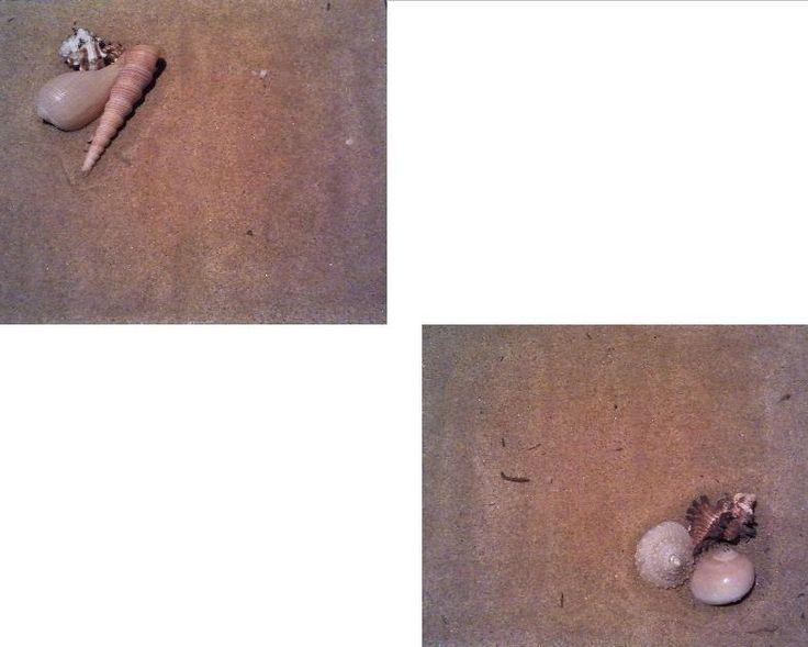 Spiaggia e Conchiglie - 2012 - Acrilico su tela con sabbia di mare e conchiglie - Acrylic on canvas with sand and sea shells 2 tele/canvas 24x30cm