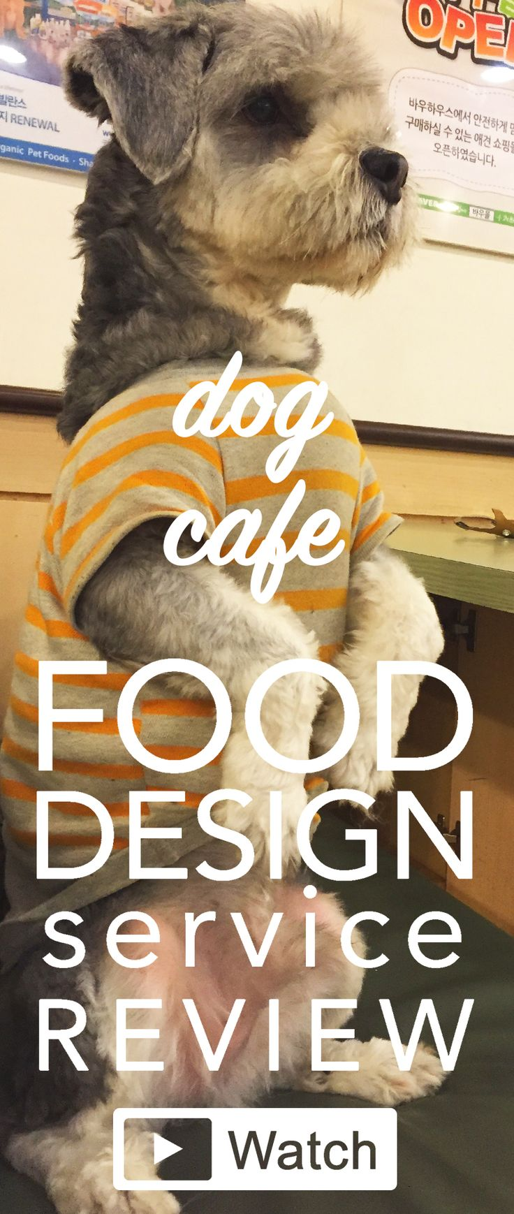 Food Design Service Review: Watch my video review here: http://francesca-zampollo.com/a-dog-cafe-in-seoul/